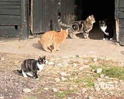Pussy Cat Lodge