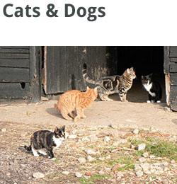 services-squares-cats-dogs