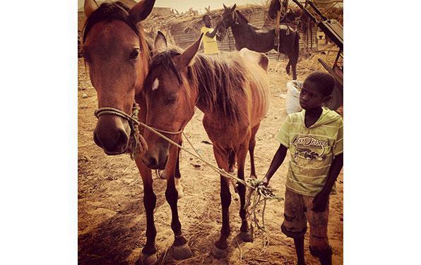 Horse-at-lumo-June-2013-localride