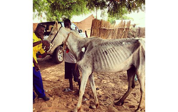 Horse-at-lumo-June-2013