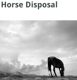 services-squares-horse-disposal