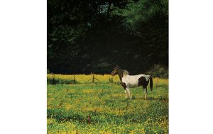 Pony in Field. Adam Hargreaves