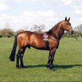 Ramblers-Leanda-Stallion