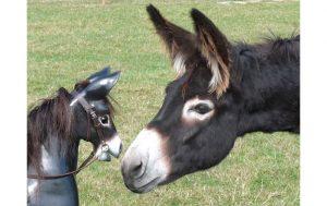 Rocking-donkey2