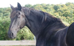 Our Chester during his retirement at The Horse Trust
