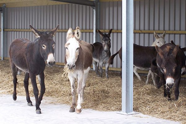 Island Farm Donkey-Sanctuary