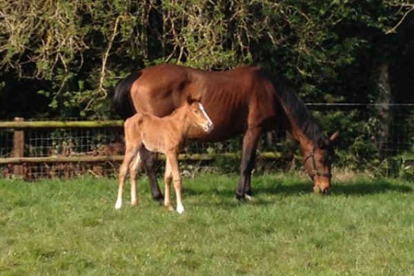 Writtle-College-Foals-3-March-2014