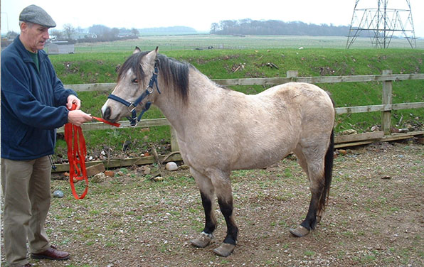 Rosie upon arrival at World Horse Welfare