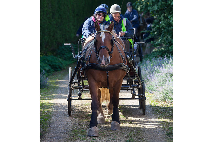 Photography: Niels Van Gijn Kennet Valley Carriage Driving Group (KVCDG) Riding for the Disabled Association (RDA) and Marlborough Downs NIA Project