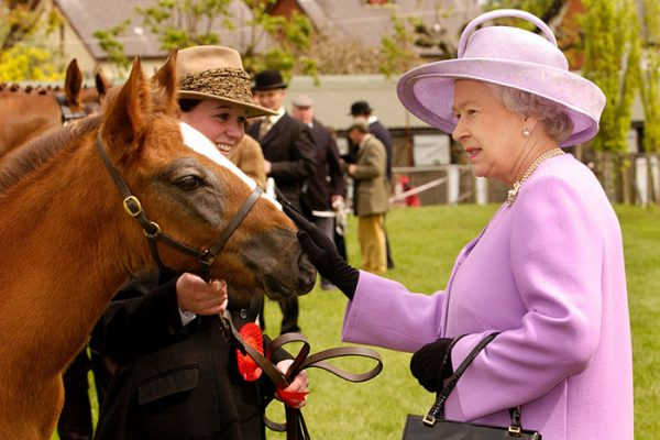 Queen Elizabeth II attracts the attention of Ed, a two month old Irish Draught colt foal, shown by Katherine Montgomery from Augher, County Tyrone at the Royal Ulster Agricultural Show, Balmoral on the final day of the Queen's Golden Jubilee visit to Northern Ireland