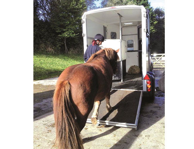 Horse-loading-onto-a-trailer