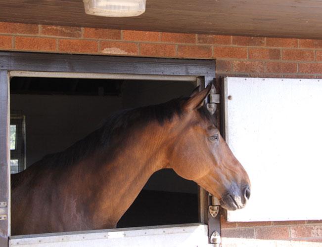 Horses-stabled-longer-in-winter