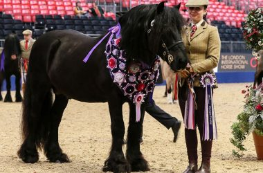 Guards Jester Supreme Champion Senior In Hand Showing Series Championships owned by Christina Brooks