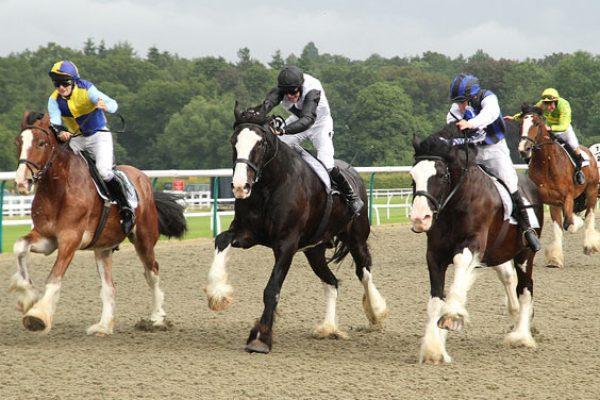 Shire Horse Race