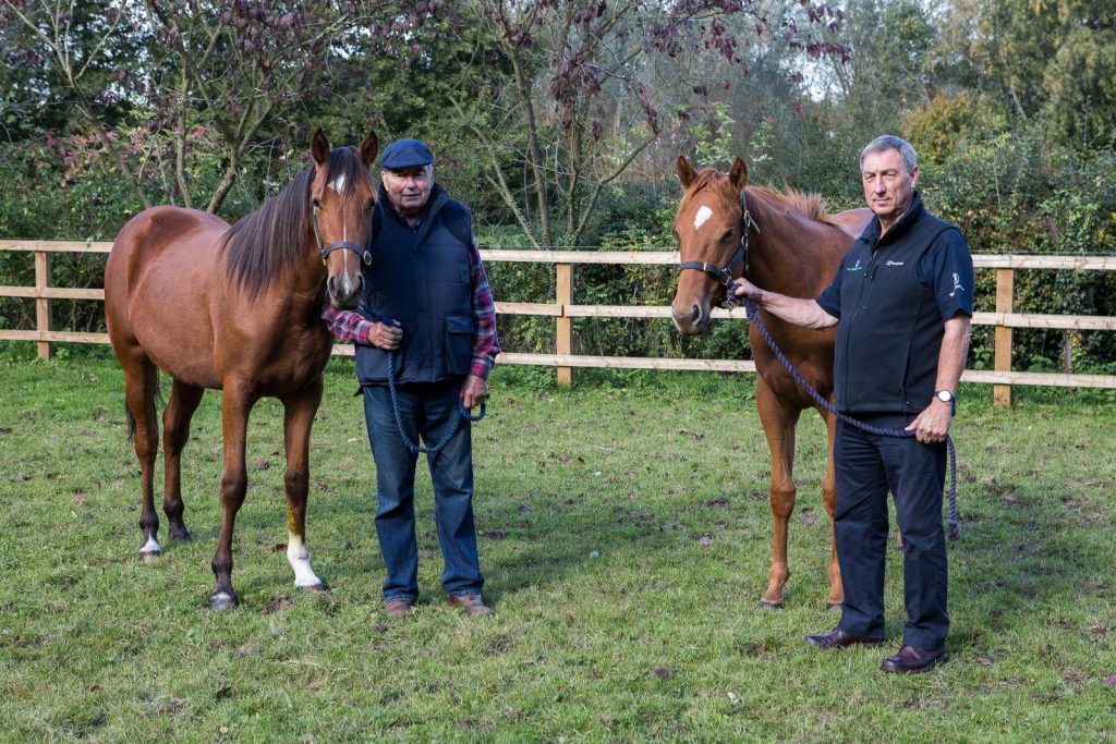 World Horse Welfare Polaris rescued foal