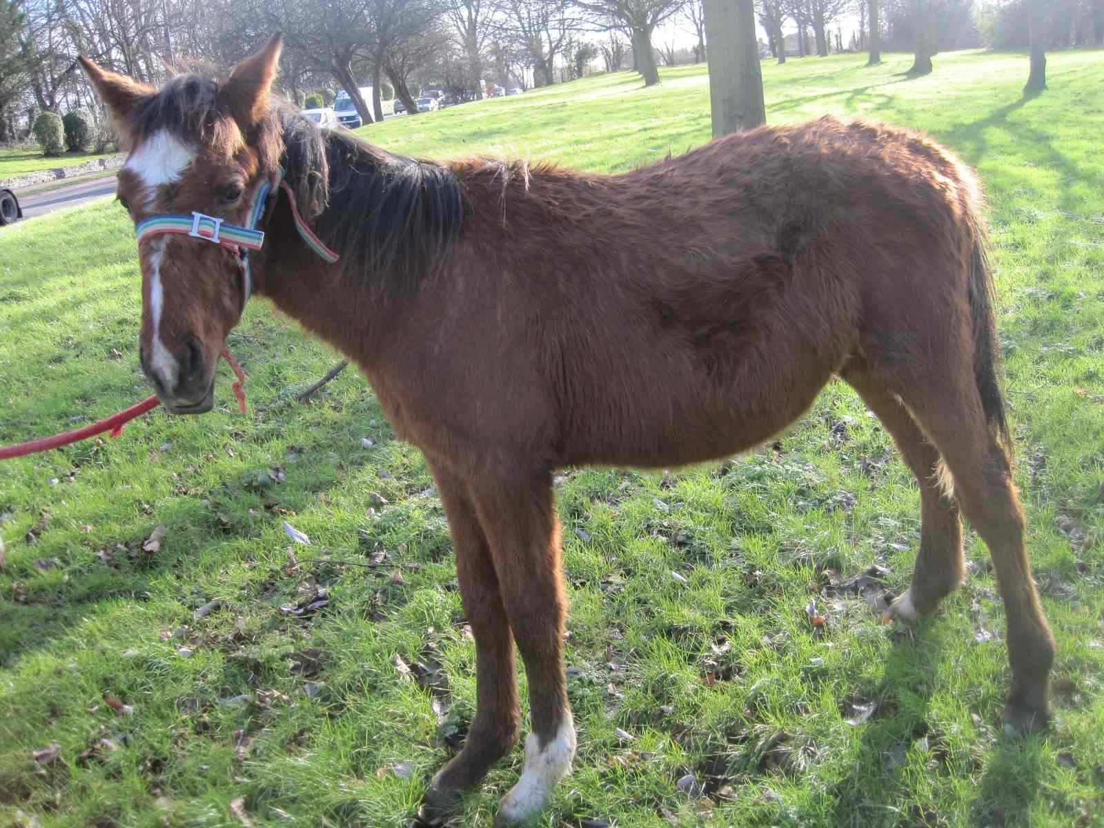 World Horse Welfare Polaris