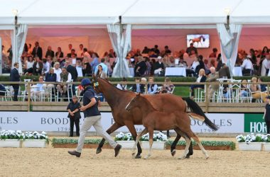 Bolesworth Elite Auction Big Star