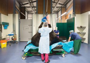 Sussex equine Hospital Operating Theatre
