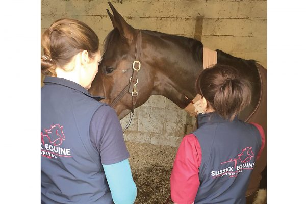 Blood Transfusions in horses