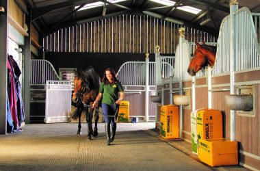 Bedmax bedding stabled horse