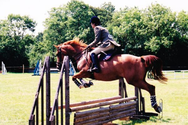 Tips when buying a horse showjumper