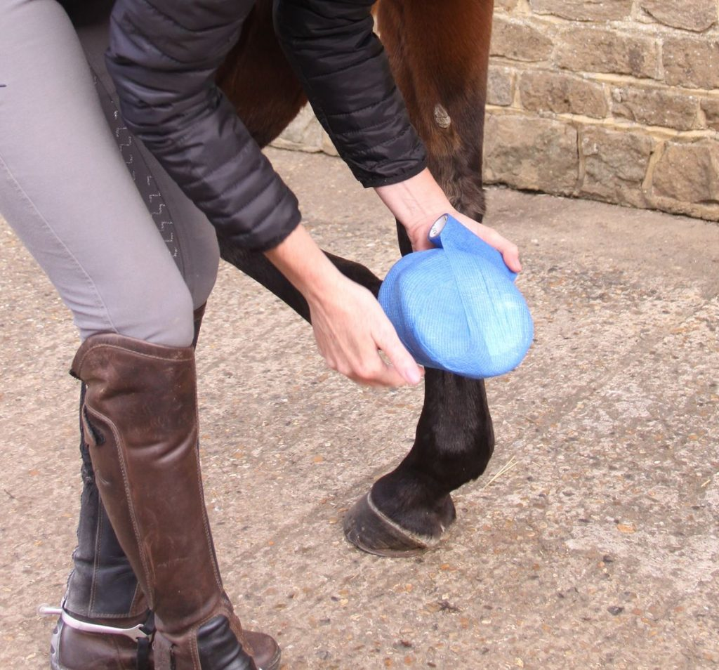 Injury to the horse's foot and hoof can result in an abscess