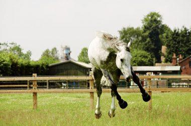 Fizzy horse