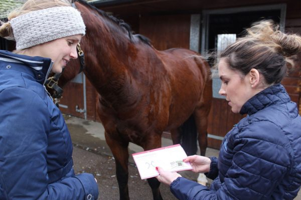 BEVA launches equine obesity pilot scheme